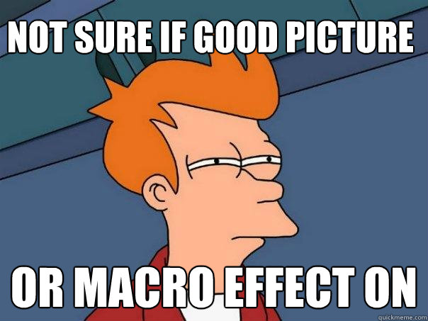 Not sure if good picture  or macro effect on  - Not sure if good picture  or macro effect on   Futurama Fry