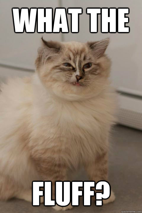 What The Fluff Confused Cat Quickmeme