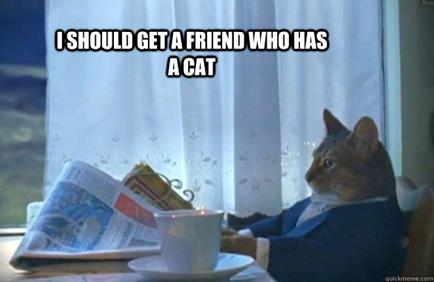 I should get a friend who has a cat - I should get a friend who has a cat  Sophisticated Cat