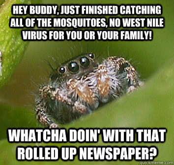 Hey buddy, just finished catching all of the mosquitoes, no West nile virus for you or your family! Whatcha doin' with that rolled up newspaper?  Misunderstood Spider