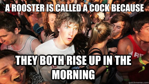 A rooster is called a cock because they both rise up in the morning - A rooster is called a cock because they both rise up in the morning  Sudden Clarity Clarence