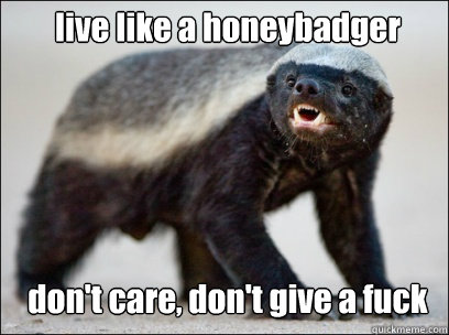 live like a honeybadger don't care, don't give a fuck  Honey Badger