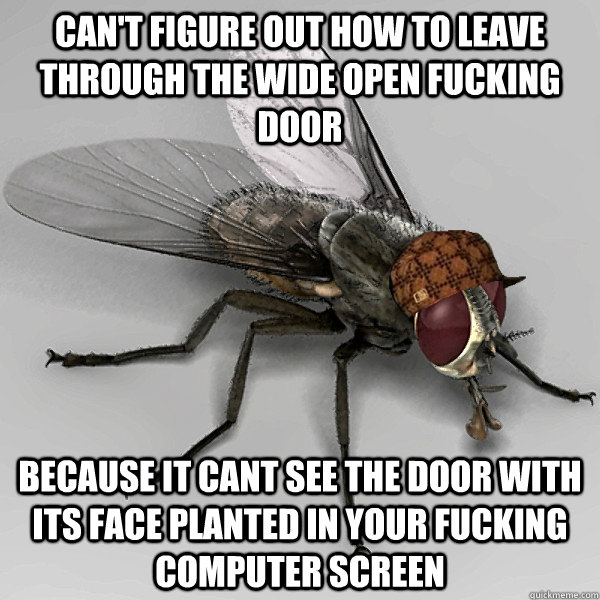 can't figure out how to leave through the wide open fucking door  because it cant see the door with its face planted in your fucking computer screen