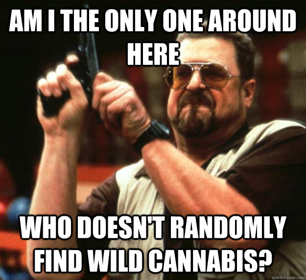 am I the only one around here Who doesn't randomly find wild cannabis? - am I the only one around here Who doesn't randomly find wild cannabis?  Angry Walter