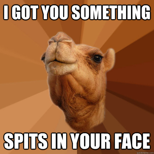 5a56b986a2c97816b62668193fb4a1eca000cfbc1a70a781700862afec3dd292 i got you something spits in your face spit camel quickmeme