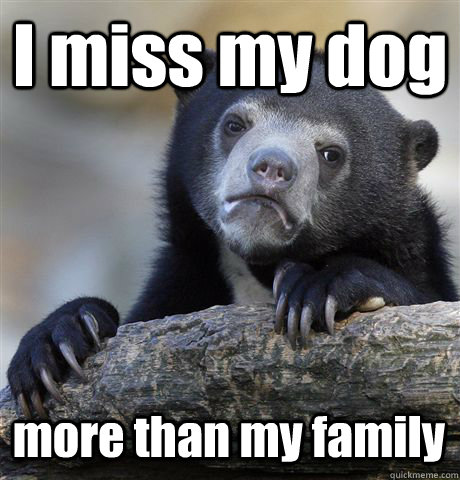 I miss my dog more than my family  - I miss my dog more than my family   Confession Bear