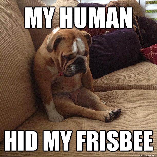 My human hid my frisbee