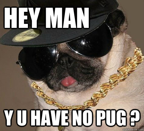 Hey MAN Y U HAVE NO PUG ?