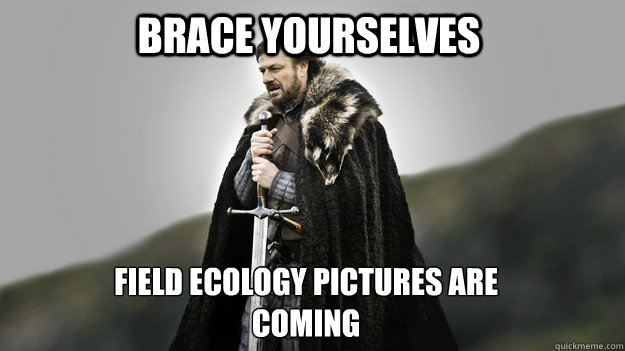 Brace yourselves Field Ecology Pictures are coming - Brace yourselves Field Ecology Pictures are coming  Ned stark winter is coming