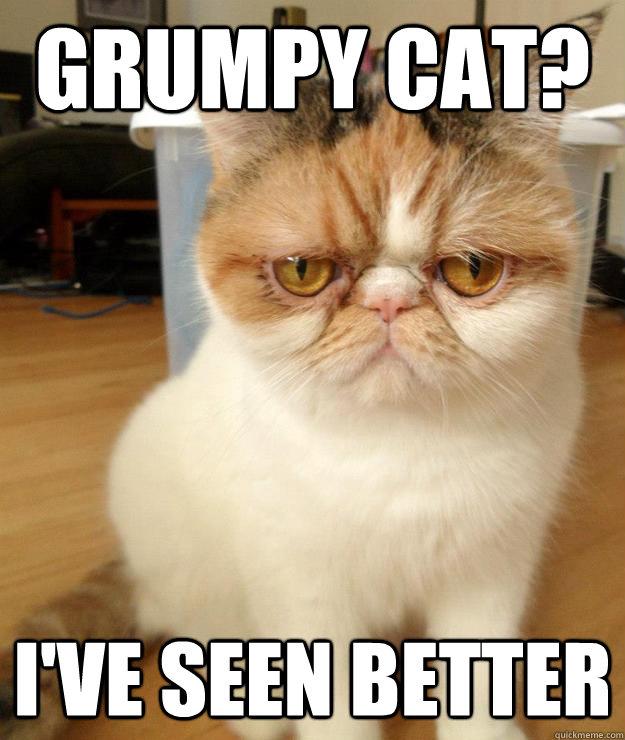 no grumpy cat quickmeme - 625×740