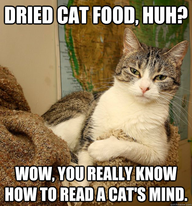dried cat food, huh? Wow, you really know how to read a cat's mind. - dried cat food, huh? Wow, you really know how to read a cat's mind.  Disdainful Cat