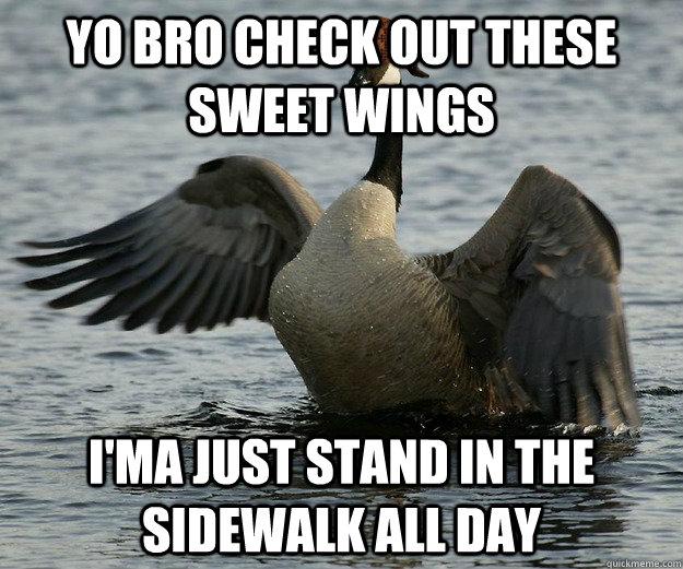 Scumbag Canada Goose Memes Quickmeme