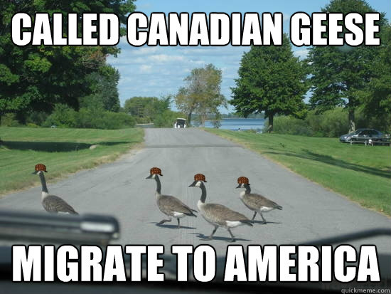 Called Canadian Geese Migrate to America  Scumbag Geese