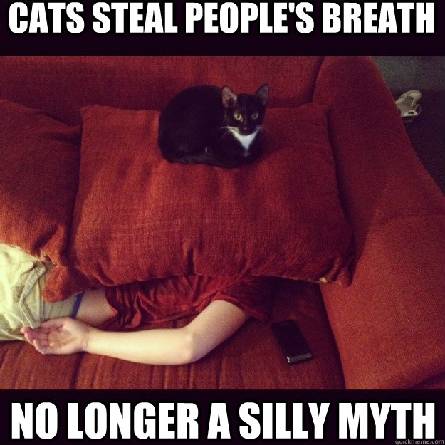 Cats steal people's breath No longer a silly myth  - Cats steal people's breath No longer a silly myth   jealous cat