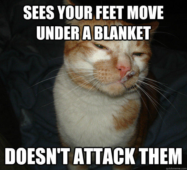 Sees your feet move under a blanket doesn't attack them