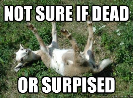 5ba5e599bcc2e0b2e0b51b030688ff0102ca2294cc62f2db09301689e5fc20ec fainting sheep memes quickmeme