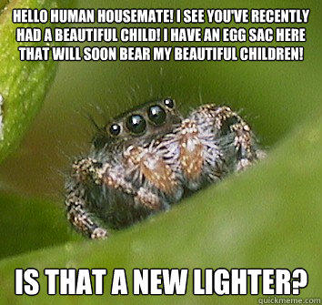 Hello human housemate! I see you've recently had a beautiful child! I have an egg sac here that will soon bear my beautiful children! is that a new lighter? - Hello human housemate! I see you've recently had a beautiful child! I have an egg sac here that will soon bear my beautiful children! is that a new lighter?  Misunderstood Spider