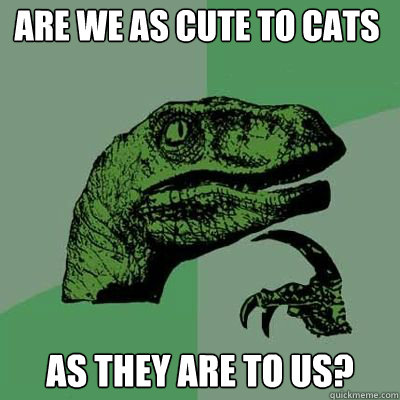 are we as cute to cats as they are to us?