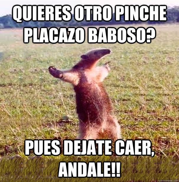 QUIERES OTRO PINCHE PLACAZO BABOSO? PUES DEJATE CAER, ANDALE!!