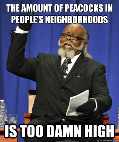 the amount of peacocks in people's neighborhoods is too damn high - the amount of peacocks in people's neighborhoods is too damn high  The Rent Is Too Damn High