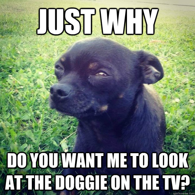 just why do you want me to look at the doggie on the tv? - just why do you want me to look at the doggie on the tv?  Skeptical Dog
