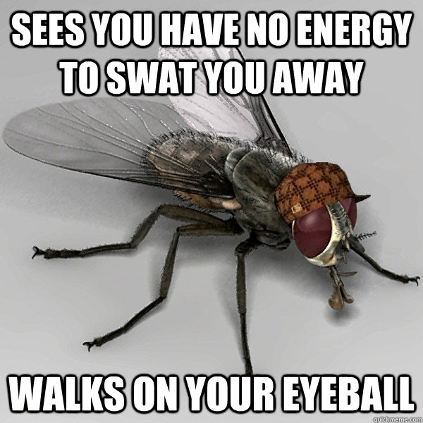 sees you have no energy to swat you away walks on your eyeball - sees you have no energy to swat you away walks on your eyeball  Scumbag Fly