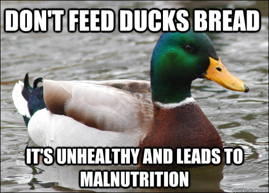 Don't feed ducks bread It's unhealthy and leads to malnutrition - Don't feed ducks bread It's unhealthy and leads to malnutrition  Actual Advice Mallard