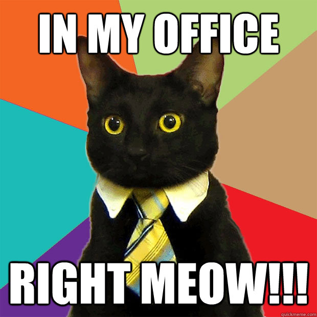 In my office right meow!!! - In my office right meow!!!  Business Cat