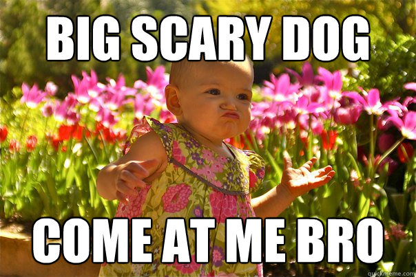 Big scary dog Come at me bro - Big scary dog Come at me bro  Misc