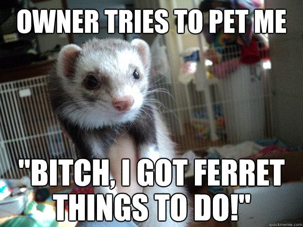deathwish ferret memes quickmeme
