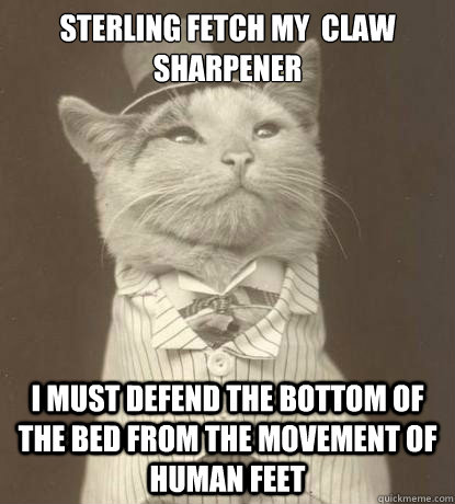 Sterling fetch my  claw sharpener i must defend the bottom of the bed from the movement of human feet - Sterling fetch my  claw sharpener i must defend the bottom of the bed from the movement of human feet  Aristocat