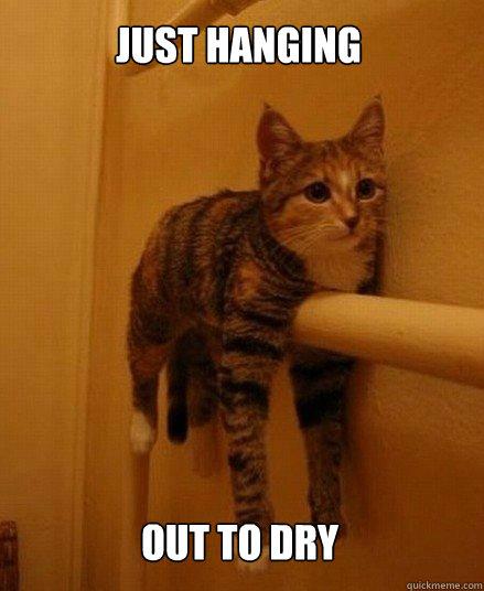 just hanging out to dry - just hanging out to dry  Monorail Cat