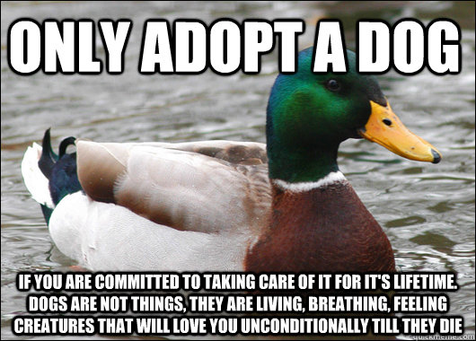 Only adopt a dog If you are committed to taking care of it for it's lifetime. Dogs are not things, they are living, breathing, feeling creatures that will love you unconditionally till they die - Only adopt a dog If you are committed to taking care of it for it's lifetime. Dogs are not things, they are living, breathing, feeling creatures that will love you unconditionally till they die  Actual Advice Mallard