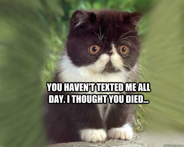 You haven't texted me all day. I thought You died...   Surprised Cat Meme
