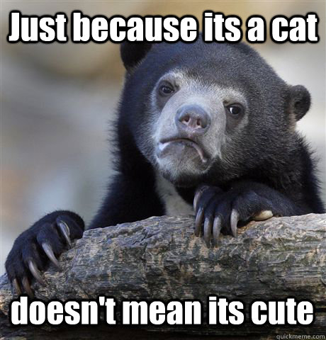 Just because its a cat doesn't mean its cute   - Just because its a cat doesn't mean its cute    Confession Bear