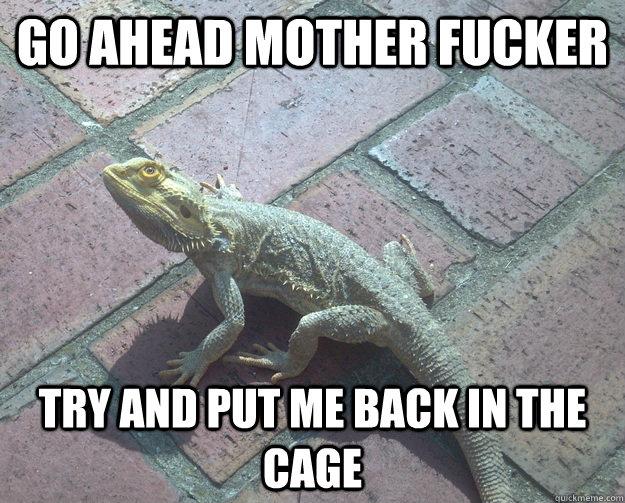 irate bearded dragon memes quickmeme