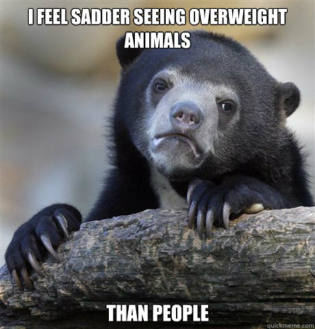 I feel sadder seeing overweight animals Than people - I feel sadder seeing overweight animals Than people  Confession Bear