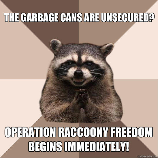 The garbage cans are unsecured? Operation Raccoony Freedom begins immediately! - The garbage cans are unsecured? Operation Raccoony Freedom begins immediately!  Evil Plotting Raccoon