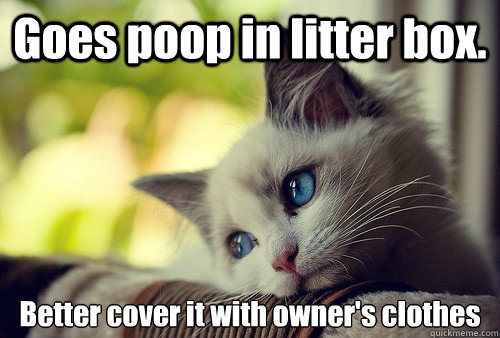 Goes poop in litter box. Better cover it with owner's clothes - Goes poop in litter box. Better cover it with owner's clothes  First World Cat Problems