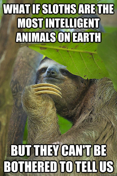 What if sloths are the most intelligent animals on earth but they can't be bothered to tell us - What if sloths are the most intelligent animals on earth but they can't be bothered to tell us  Philososloth