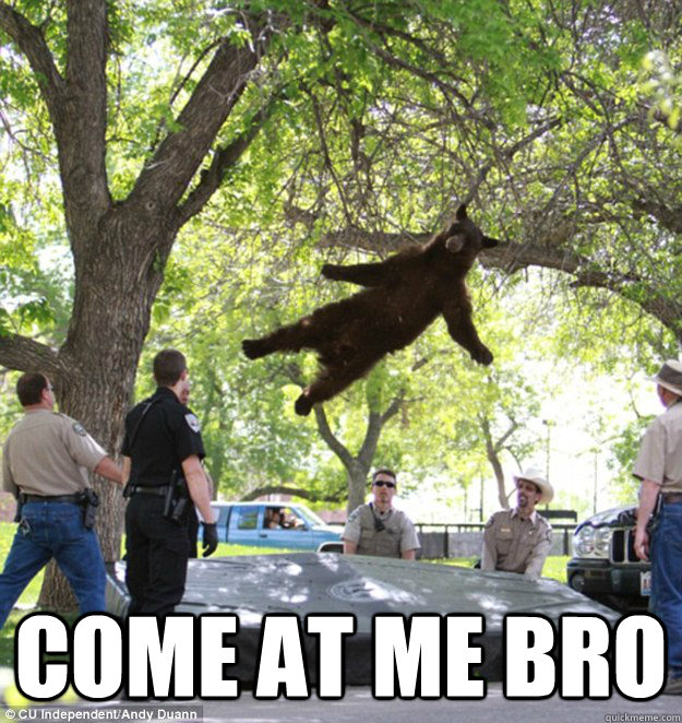come at me bro  falling bear