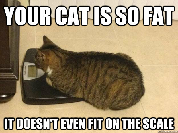 Your cat is so fat it doesn't even fit on the scale - Your cat is so fat it doesn't even fit on the scale  too fat cat