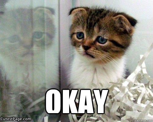 pics photos   sad cat meme