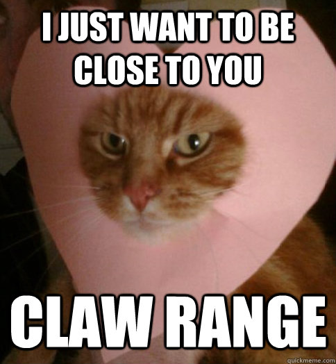 I just want to be close to you claw range  Valentine Cat