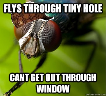 Flys through tiny hole cant get out through window - Flys through tiny hole cant get out through window  Scumbag Fly