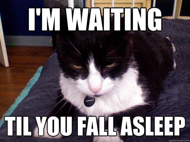 Sinister Cat Meme