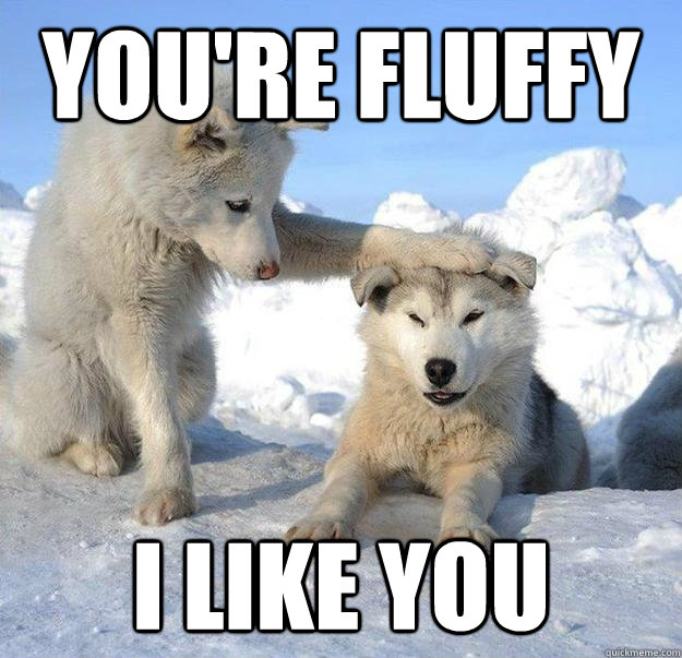 You're fluffy I like you - You're fluffy I like you  Caring Husky