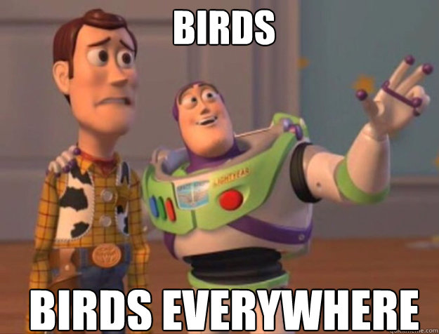 birds birds everywhere - birds birds everywhere  buzz woody