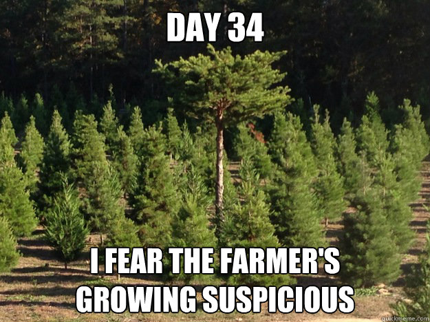 Inconspicuous Christmas Tree Memes Quickmeme