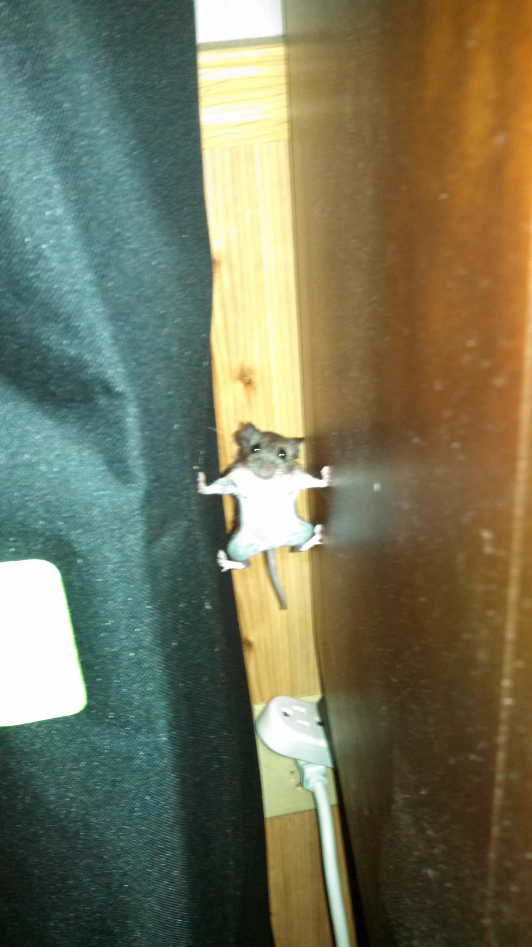 A mouse that went into Mission Impossible mode in my house last year.  -   Misc